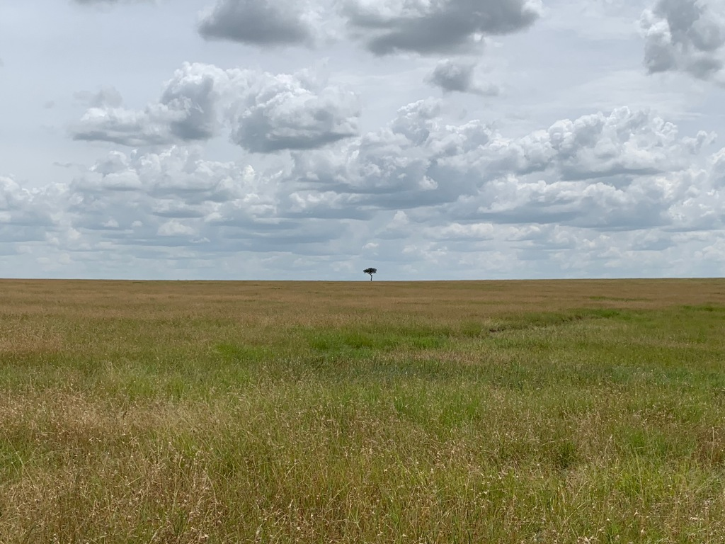 A lone tree in a sea of grass (Serengeti)