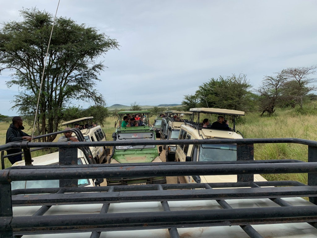 Cluster of safari vehicles