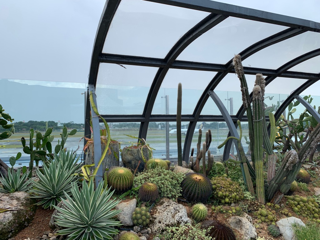 Cactus garden at Singapore Changi airport