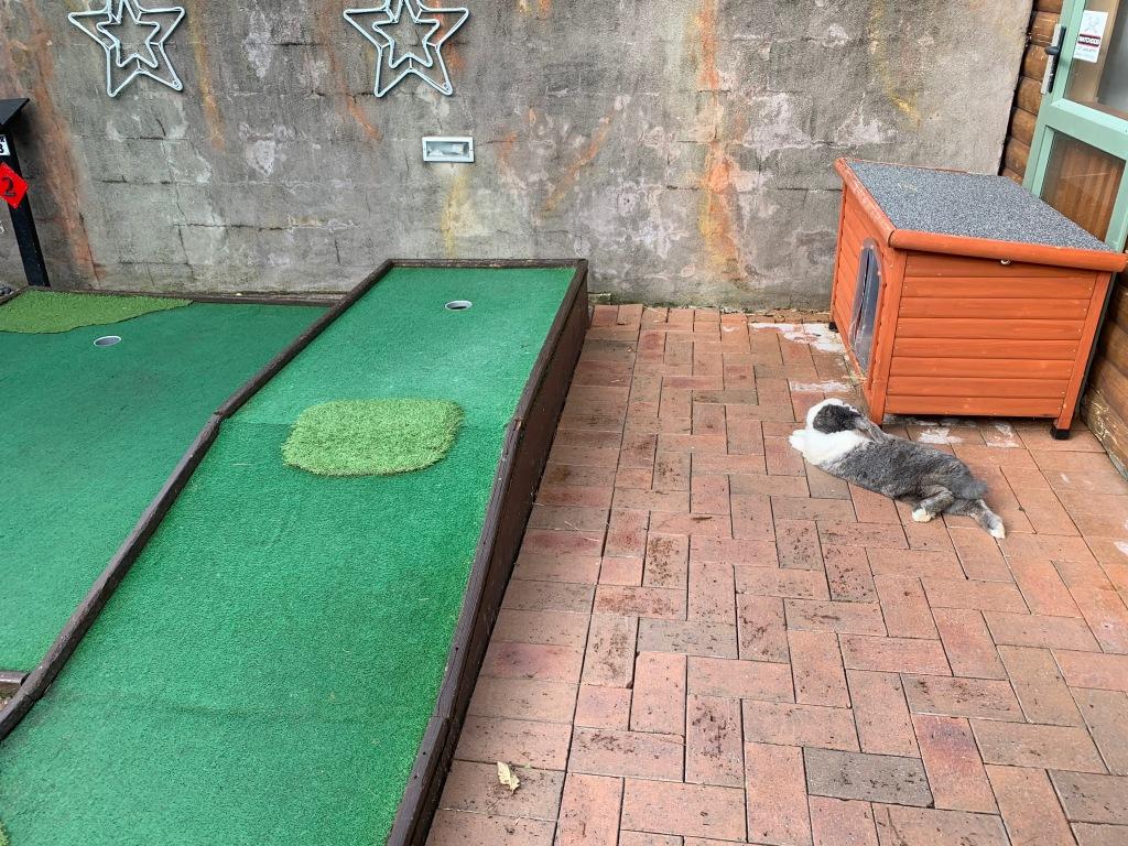 Mini golf with bunnies